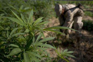El consumo de drogas causó pérdidas económicas superiores a los $193,000...