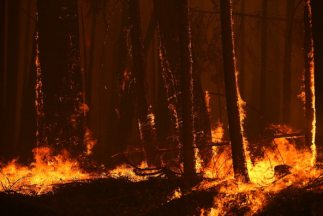 Rim fire incendio Yosemite