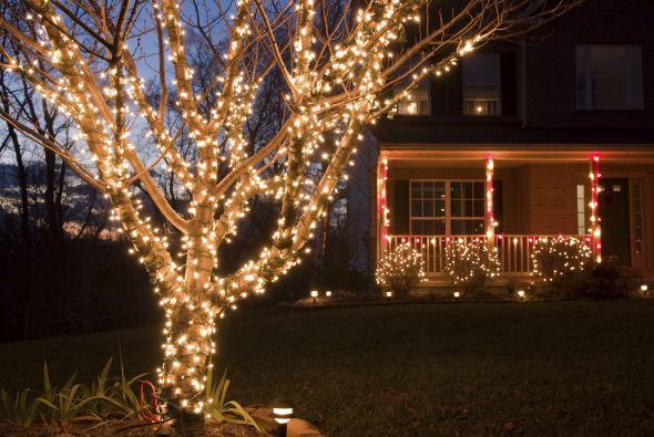 Luces navide as elige s lo lo mejor univision - Luces para arbol de navidad ...