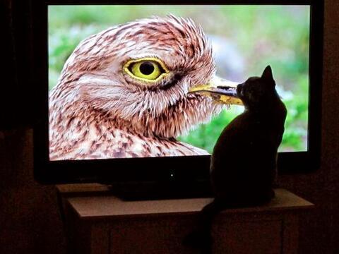 ¡Coco es un felino adicto a la TV!