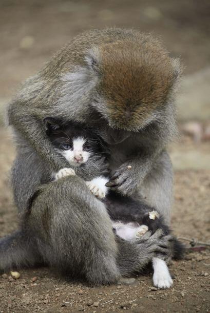 ¡Ese felino debe ser feliz por tener tan buena y especial madre!