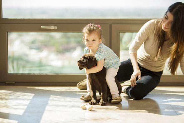Bebés y animales en foco: el desafío. Se mueven demasiado y no puedes an...