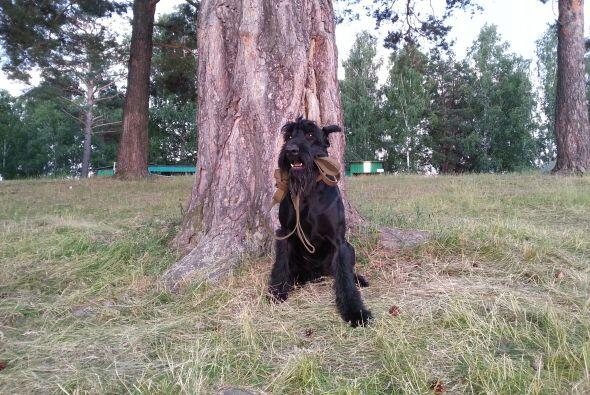 No es raro encontrarnos perros que son capaces de desarrollar muchas y m...