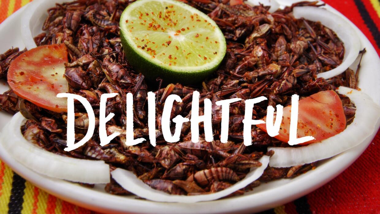 Comer insectos