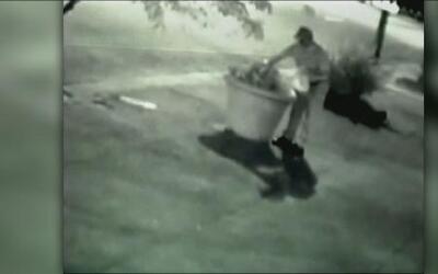 ¡Captado en cámara! Un hombre roba flores de una maceta en Kentucky