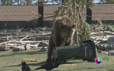 Depósito de basura a prueba de osos