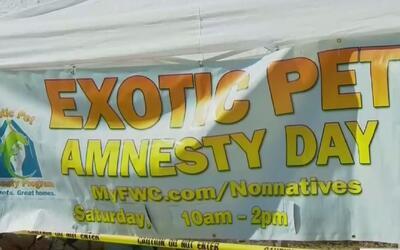 Se efectuó el Día de Amnistía de Mascotas Exóticas en el centro de Florida