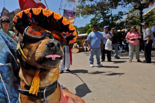 La fiesta en que se celebra a México y su batalla de Puebla, es un feste...