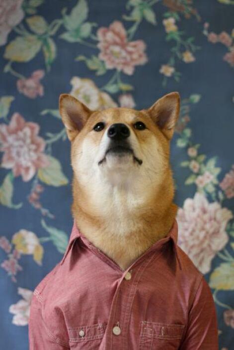 Bhodi es el nombre de este simpático can de cuatro años de edad.