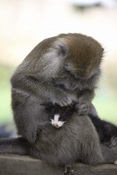 Indonesia es el hogar de los animales con los más raros comportamientos.