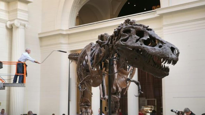 El geólogo Bill Simpson limpia un Tiranosaurio Rex de 67 millones de año...