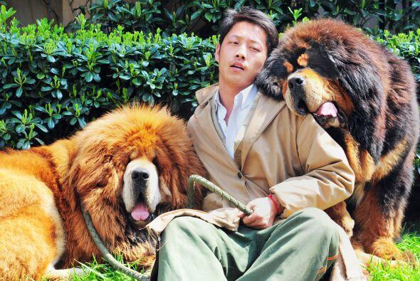 Un excéntrico millonario chino pagó $1.9 millones de dólares por uno de...