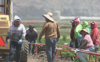 Trabajadores del campo abrigan la esperanza de una legalización gracias...