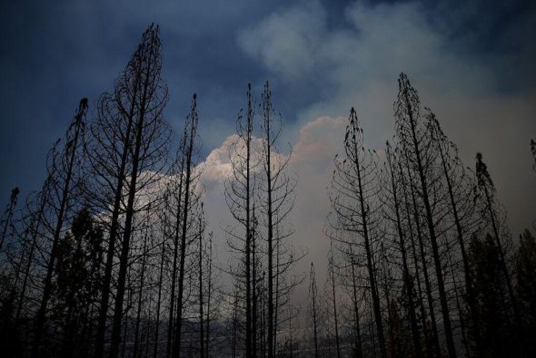 Están activos al menos otros 19 incendios notables en el estado, lo que...