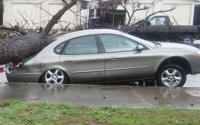 La parte delantera del auto quedó levantada tras la caída del árbol. Pomona