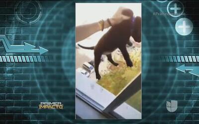 Un joven pide perdón por maltratar a un perro y difundir el video en red...