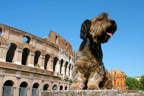 No podía faltar entre sus destinos turísticos  el Coliseo,...