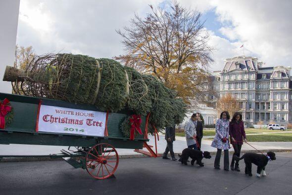 El árbol de este año mide unos 18 pies de altura.