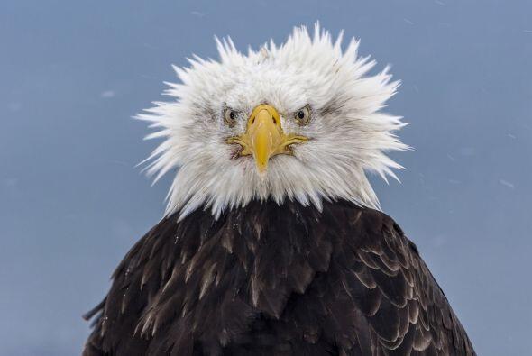 Mientras buscaba alimento con fuertes vientos en su contra, ¡qued&...