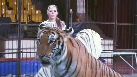 Conoce a la feroz egipcia domadora de animales depredadores
