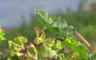 El uso de pesticidas preocupa a agricultores y activistas