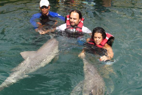 Constantemente viajan a Colombia. Aquí jugando con los delfines e...