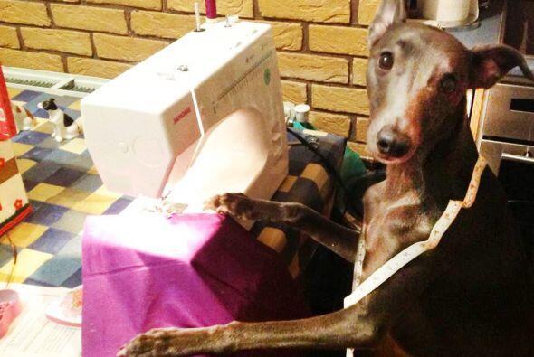 Su nombre es Rupert y es un perro que le encanta modelar.