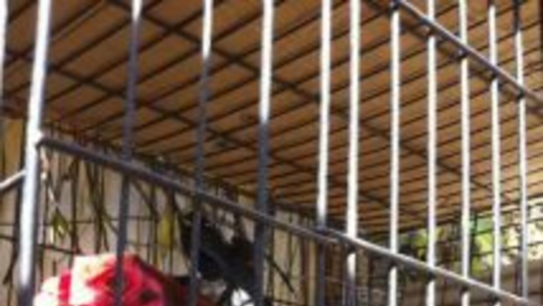 Foto cortesía de Monroe County Sheriff's Office: Muchos gallos no tenían...