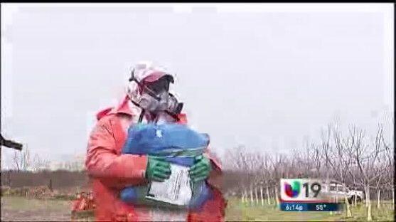 Con el veneno en la piel: peligros que enfrentan agricultores