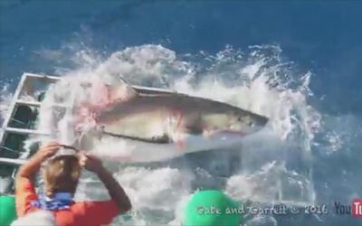 Un tiburón entra en la jaula de un buzo en México y este se salva de mil...