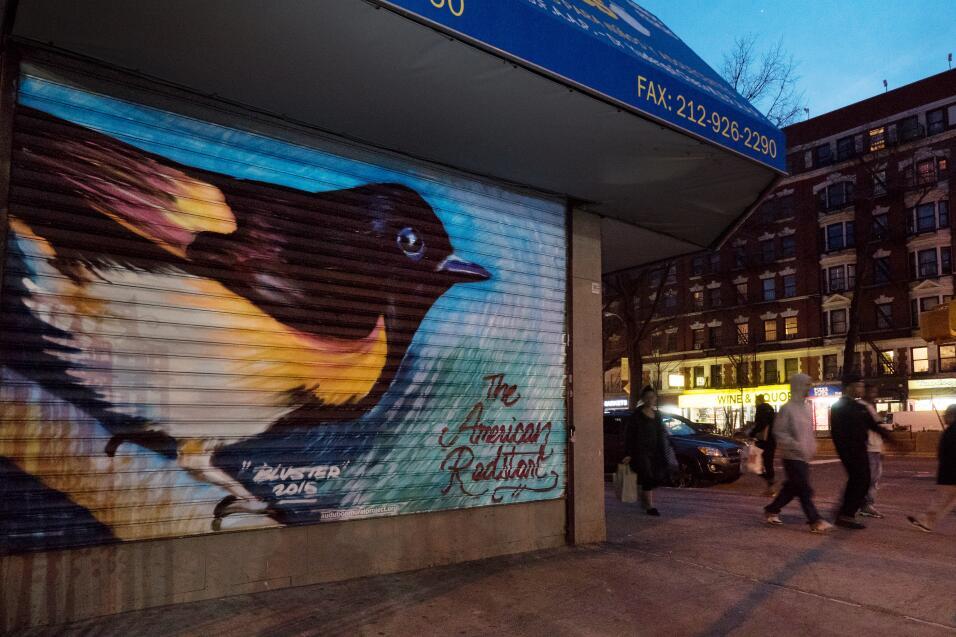 Guía de aves en los grafitis de Nueva York 1%20AmericanRedStart_MikeFern...