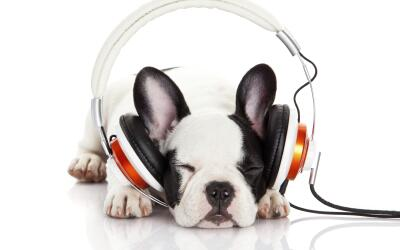 A tu perrito también le gusta la música