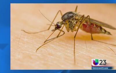 Picadas de mosquitos, algo más que molestas