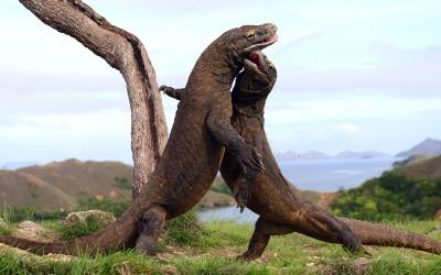 ¡Godzilla participa en la pelea del siglo!