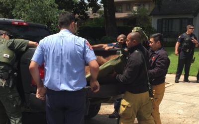 Una osa negra fue capturada y llevada una zona segura en Pasadena.