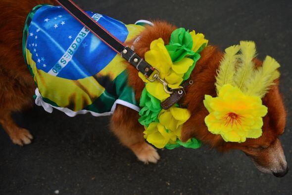 Como esta amiga canina que también lleva la bandera nacional en su vestido.