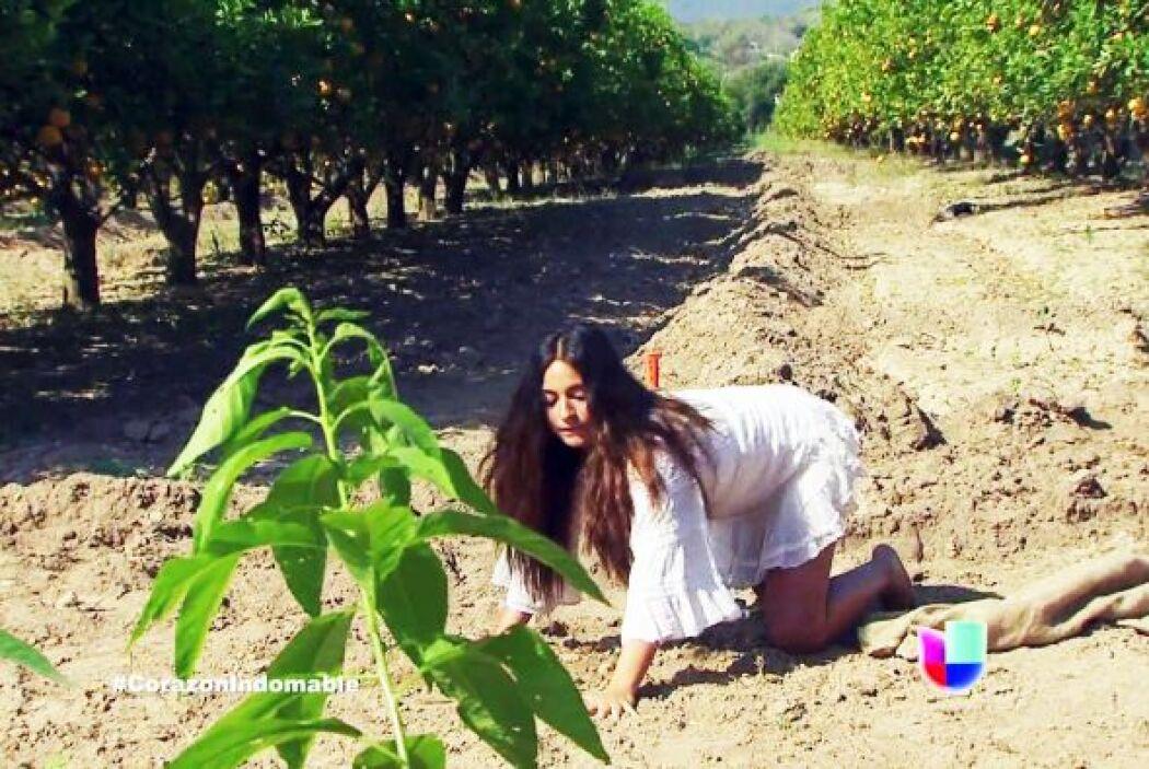 Robaba frutas para su familia y se arrastraba por la tierra.