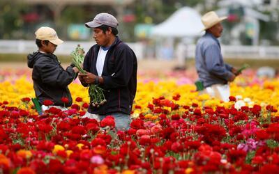 Los trabajadores hispanos impedirán el descenso en la población empleabl...