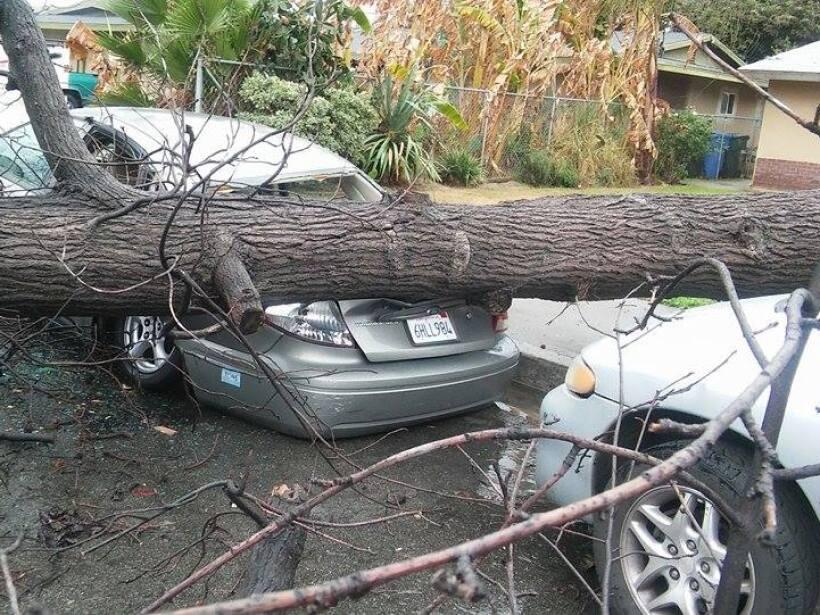 El árbol destrozó la parte trasera de un auto en Pomona, CA
