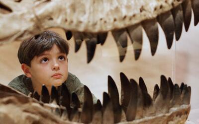 dinosaurio en museo