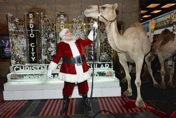 Hay días que ayuda a los Reyes Magos a pasear sus camellos.