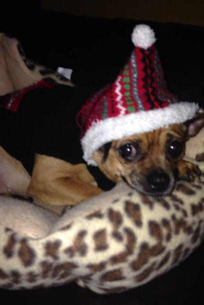 Andrea Valera y su adorable mascota disfrazada de navidad.