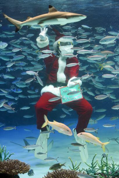 Y es que en este acuario de Tokio, en Japón, Santa se encuentra muy feli...