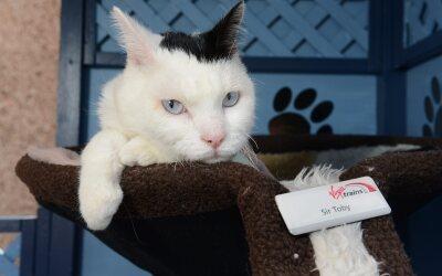 Un gatito se convierte en parte del staff de una estación