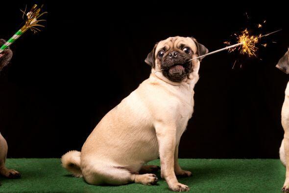 Mira estos consejos de los expertos para que los perros no se asusten y...