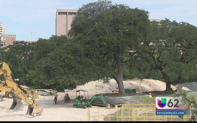 Mudan tres robles de la Universidad de Texas