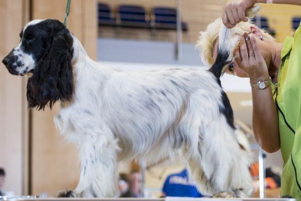 Los expertos recomiendan que un perro que pasa gran parte de su día en c...