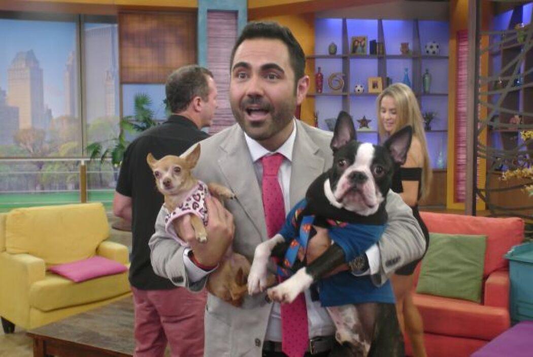 Enrique siempre ha sido amante de los perros y qué mejor que tener a las...