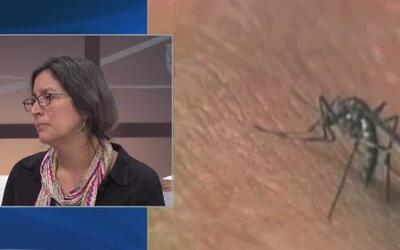 No da tregua el mosquito del Chikungunya en la isla