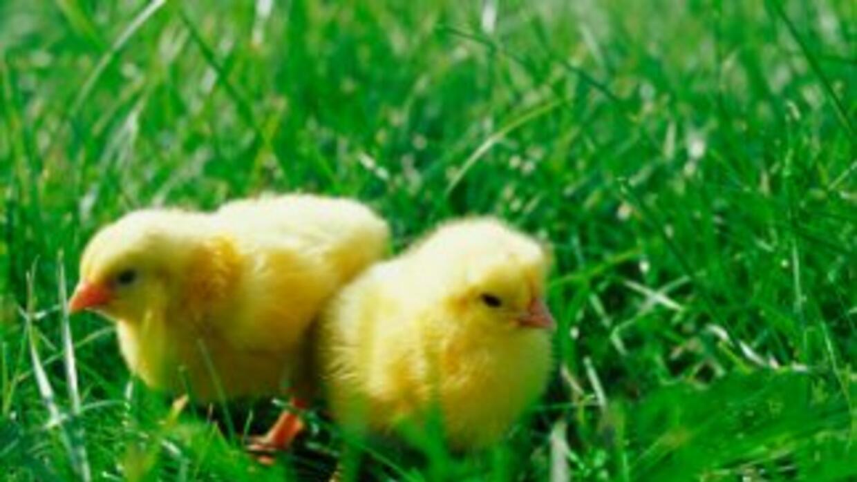 No regales animalitos vivos en Pascua